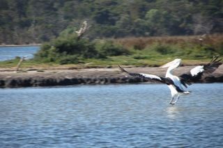 Bird Life on Lake Victoria - 09