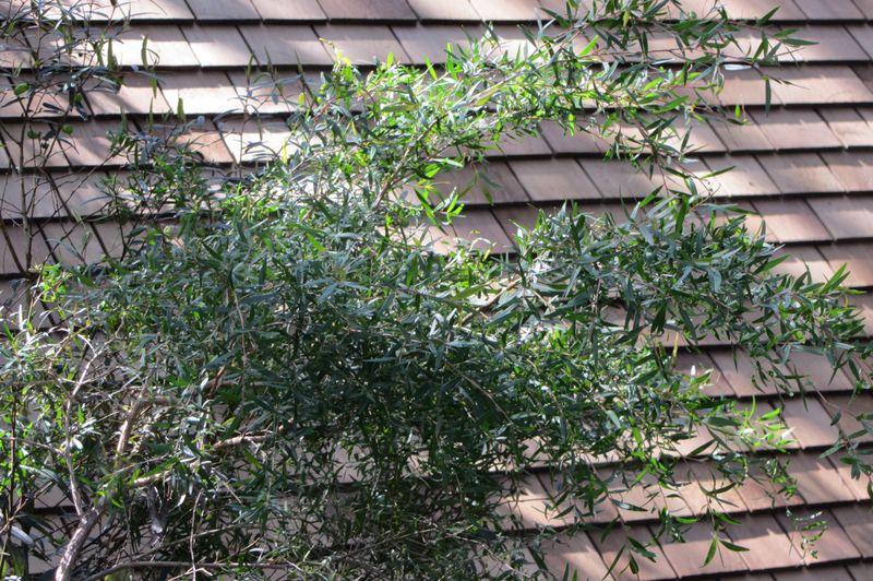 Bush Tucker Plants - 08