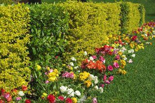 Border Garden - 3