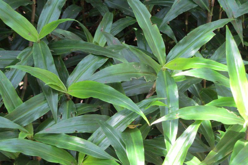 Bush Tucker Plants - 13