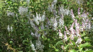 Montane Walk wild flowers - 07