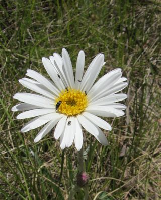 Montane Walk wild flowers - 10