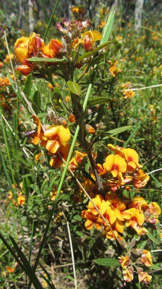Montane Walk wild flowers - 09